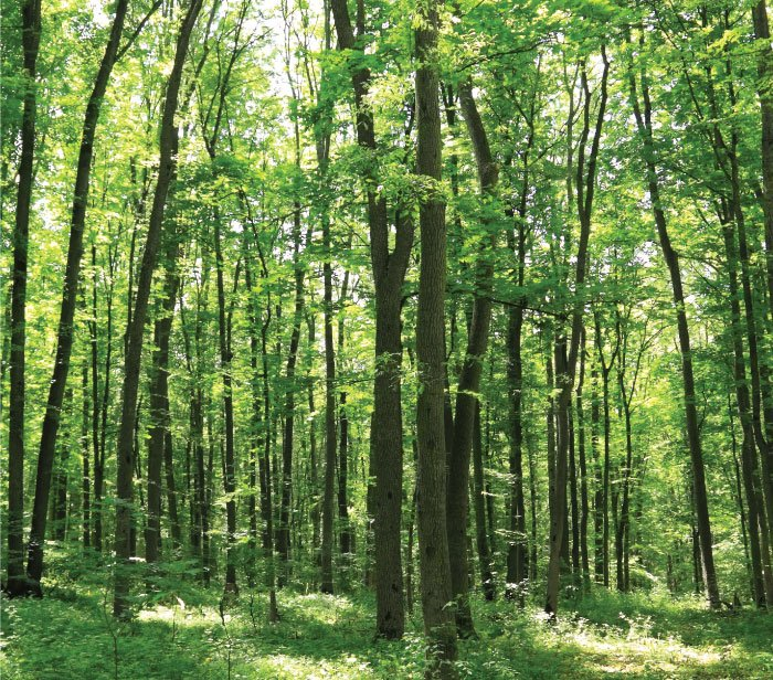 Bluesign System Partner Sustainability Environmentally Conscious