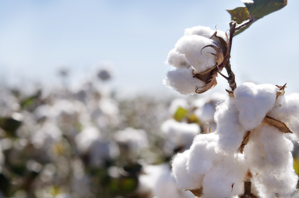 Brand_ID_Australia_Produces_Largest_Cotton_Crop