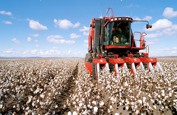 Brand_ID_Reducing_Cotton_Production